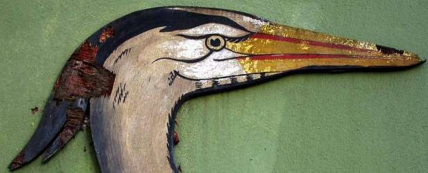 Heron at Loris Gardens © Suzie Maeder